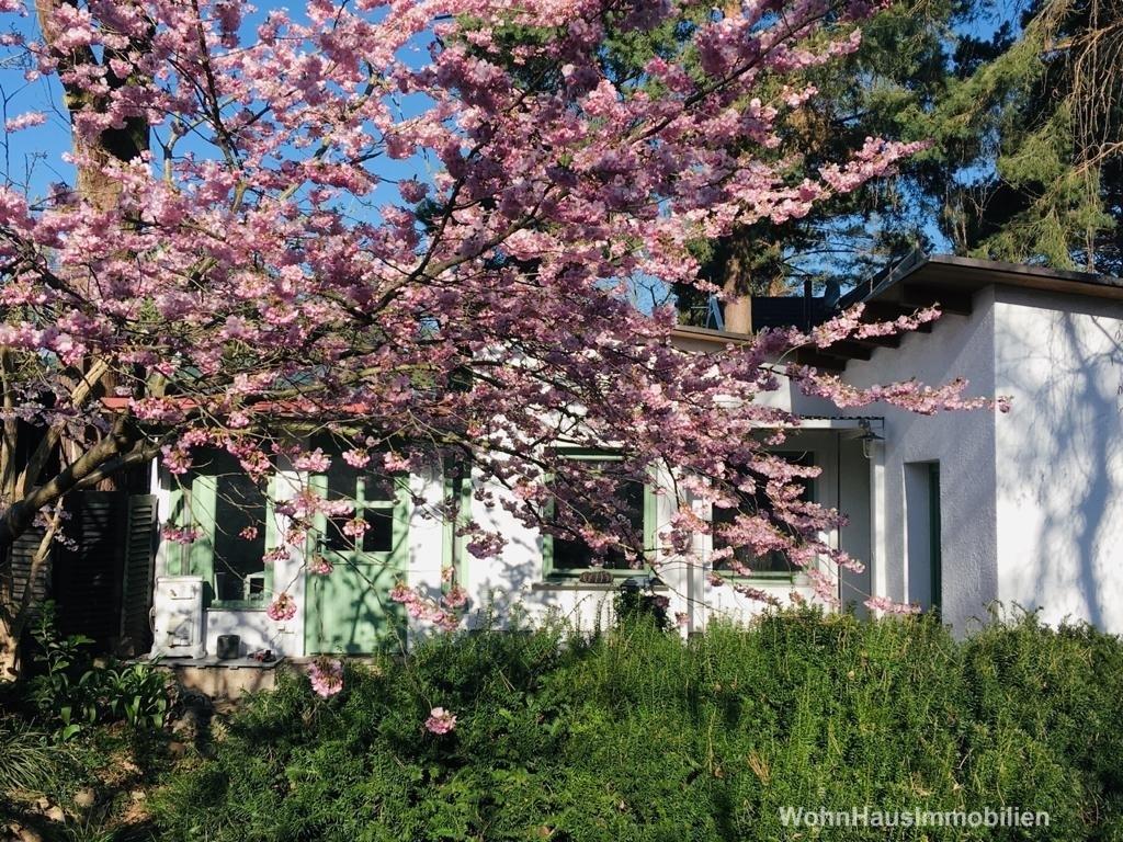 Das Frühlingserwachen steht kurz bevor